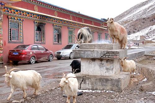 貝納溝(文成公主廟)