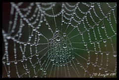 dewy web (Lucy-W) Tags: autumn cold water fog canon eos spider droplets web spiderweb sparkle dew tamron90mm 50d