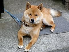 Happy to see people (Matt-san) Tags: japan japanese tokyo photosjapan
