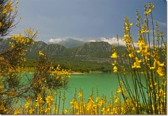 a me i laghi mi piacciono assai (iana) Tags: lake mountains verde green water yellow lago giallo acqua monti molise isernia mainarde ginestre castelsanvincenzo
