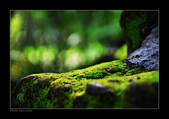 Moss covered rocks [explored] (e.nhan) Tags: life green art nat