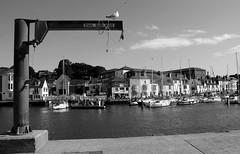 IMG_2944 (Agns Jaffre) Tags: noiretblanc port mer mouette bateau blackandwhite bw goeland oiseau