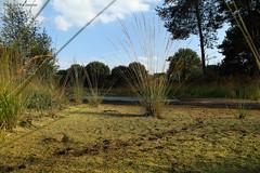 Droog (Wim Zoeteman) Tags: ven veen droogte formerhoek ruurlo herfst najaar fall autumn september 2016 wimzoeteman veenmos sporen