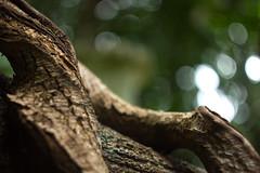 IMG_1875_1 (pavel.milkin) Tags: thailand phuket kathu travel nature kathuwaterfall leaves canon canon550d 550d helios helioslens helios442 442 green liana tree colour bokeh bokehlicious