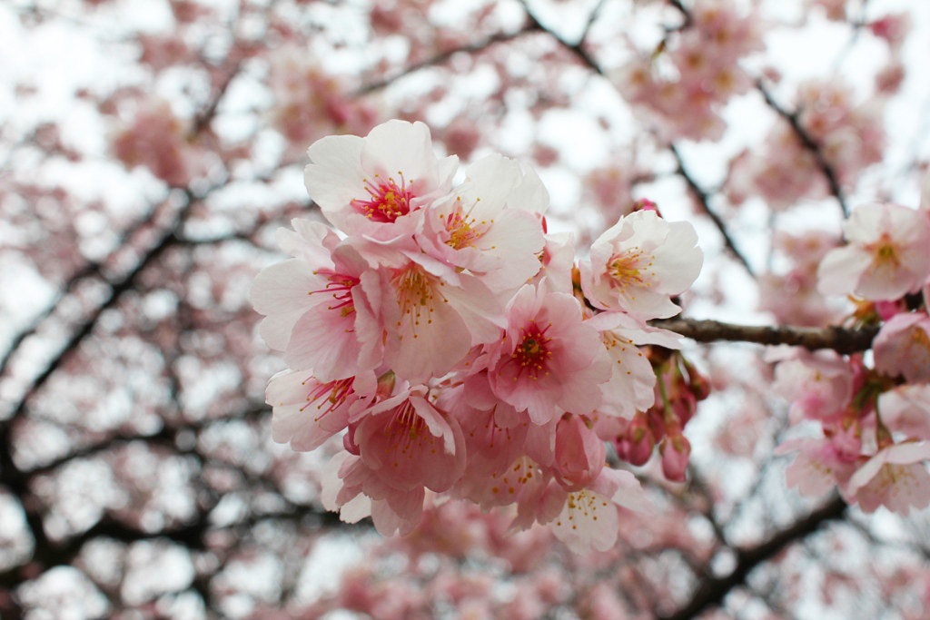 Spring has come (5)