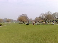 Brighton Parkrun Venue
