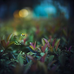 211/365 (brandonhuang) Tags: leica light plants plant blur flower green field leaves dark 50mm leaf dof bokeh noctilux depth m9 f095 50mmf095 brandonhuang leicam9 noctilux50mmf095