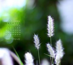 April Calendar (Faisal | Photography) Tags: flower green colors canon eos dof natural bokeh 14 usm 50 ef canonef50mmf14usm 50d aprilcalendar canoneos50d faisal|photography فيصلالعلي