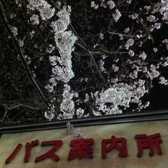 Nakano Yozakura Spot