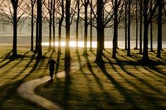 Into the Light (genf) Tags: morning trees light sun man reflection silhouette early bomen walk sony amstel wandeling weerspiegeling reflectie ouderkerk tmt a700 ouderkerkerplas
