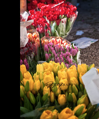 Spring flowers in an Italian market (*Marta) Tags: flowers colors yellow shopping colorful strada tulips farmersmarket market culture fresh produce mercato oudoormarket whatgettywants gettyimageswants gettywants springitalianmarketitaly