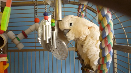 Discount Bird Toys : Bird cages: large cockatoo cage setups discount parrot supplies