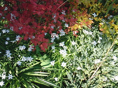 Garden colour and texutre