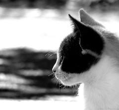 olhar (Bruno R. Rausch) Tags: bw white black cat photography for all  pb gato rights r bruno reserved peb allrightsreserved kittie gatinho rausch todososdireitosreservados bruunobc bruunorr brunorausch brunorauschphotograpghy