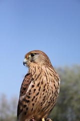 Falconry Day_1424