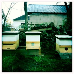 three new hives