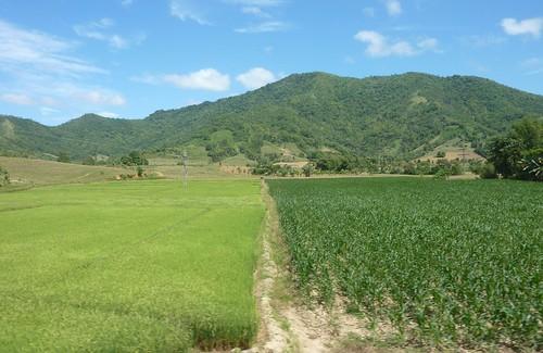 Panay-Roxas-Estancia-Iloilo (45)