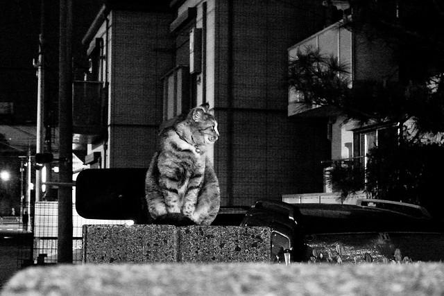 Today's Cat@2011-04-16