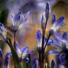 Garden Spirits (John_Phillips) Tags: johnphillips imagepoetry scilia awardtree lunagallery magicunicornverybest
