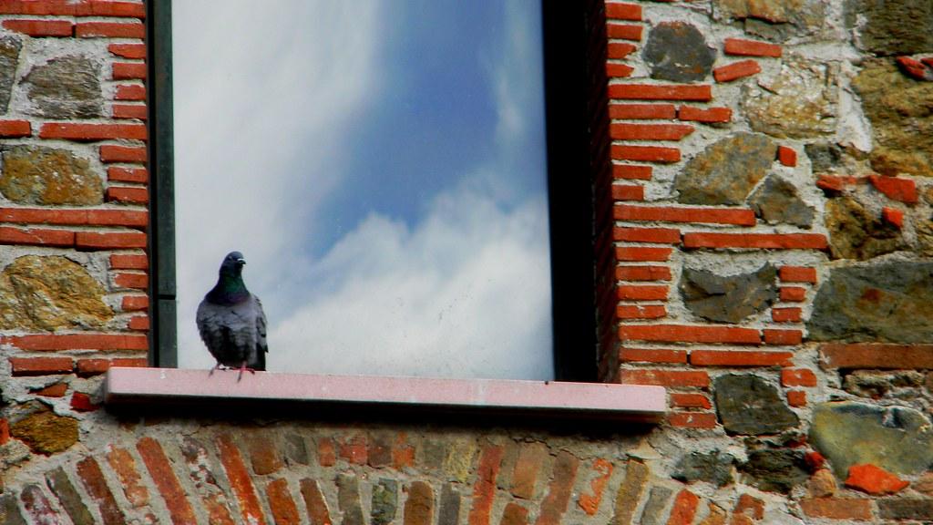 Savona, La fortezza del Priamar