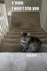 c'mon (smashz) Tags: cats juni funny lolcats