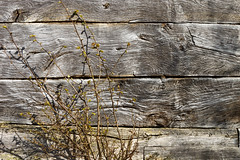 2011-04-10-Fredriksdalsparken-2817.jpg