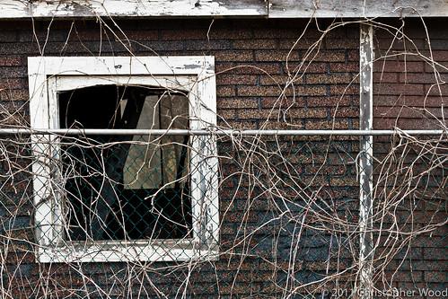 Window II
