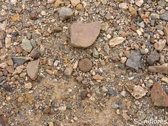 070-dia08-Eaerocarpa (Spiniflores) Tags: aerocarpa