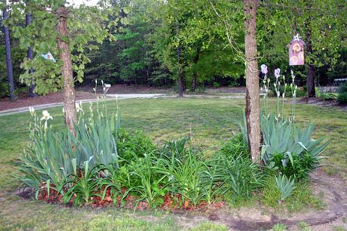 Yard April 2011