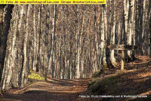 Senderismo por el Parque Nacional del Hayedo de Tejera Negra