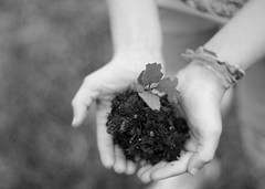 Earth Day (Bunches and Bits {Karina}) Tags: blackandwhite bw plant tree girl oak hands dirt acorn seedling transplant 52weeks hollyoak sillybands lifestylephotogrpahy takenduringtheweekearthdaywascelebratedatourschool imjustverylateinposting