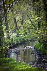 IMG_4701 River Gwendraeth Fawr in Pontyberem Park (Malcolm Alce-King) Tags: wales pontyberem gwendraethvalley