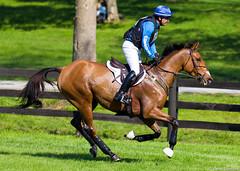 RK3DE - Phillip Dutton & Fernhill Eagle (Dahemody) Tags: horse crosscountry xc equestrian rolex equine gallop fernhill eventing 2011 kentuckyhorsepark phillipdutton rolexkentucky3dayevent rk3de fernhilleagle
