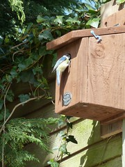 bird box2