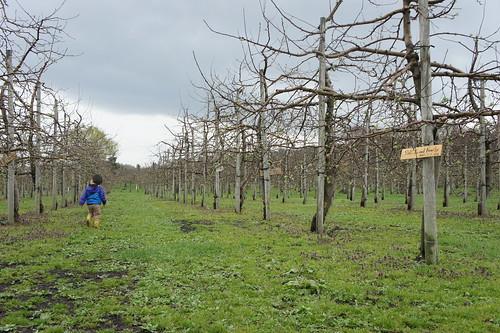 apple farm on April 30