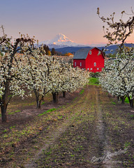 A Hard Row To Hoe (Gary Randall) Tags: sunset red oregon barn orchard mthood pear mounthood hoodriver garyrandall dsc64812