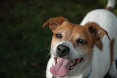 toronto dogs litterbox training