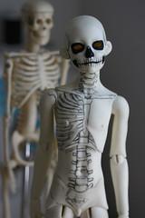 skelton WIP 6 (Kittytoes) Tags: work skeleton skull mono progress wip bones bjd anatomical explored limhwa melancholykitties limho