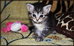 Hello to all !!! (Viola & Cats =^..^=) Tags: cats animals kittens felini gatti animali gattini