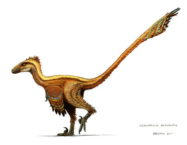 deinonychus color