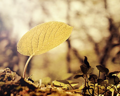 Leaf in the forest (E.L.A) Tags: light summer sunlight plant abstract nature leaves yellow horizontal closeup backlight forest turkey dark outdoors photography hope leaf spring europe day softness tranquility nobody nopeople istanbul growth environment backlit freshness gettyimages newlife lowangle selectivefocus partof leafvein singleobject colorimage fragility beautyinnature focusonforeground abigfave may2011