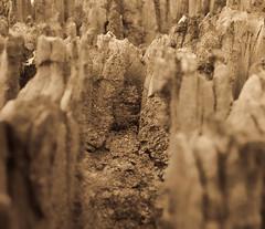 Tree stump #1 (dicktay2000) Tags: tree sepia sydney australia g11 richardtaylor 20110425img1718