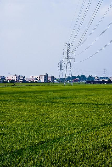 新手第九帖-官田農田拍照去