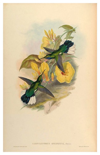 006-An introduction to the Trochilidae or family of humming-birds- Vol 2- 1861-John Gould