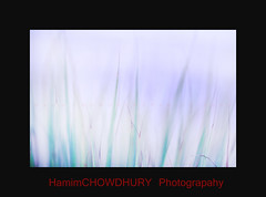 Vision (HamimCHOWDHURY  [Active 01 Feb 2016 ]) Tags: blue portrait black green nature canon faces sony surreal dhaka vaio rgb sylhet bangladesh framebangladesh digombor 595036hamimchowdhury 60ddlsreoscolorfulblackandwhitered lifeincrediblebengalgettyimagesbangladeshq2gettyimageshobigonj