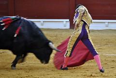 (Fotomondeo) Tags: españa valencia spain nikon bull alicante bullfight toro matador torero corridadetoros d3000