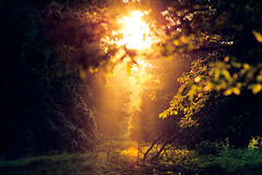 you shine in the distance (andrew evans.) Tags: lighting morning trees light summer england sun mist nature misty forest sunrise landscape golden kent woods nikon bokeh ethereal flare rays f2 sunrays wonderland d3 135mm