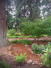 Stone Lined Path in Garden Under the Trees (Blenda Studio) Tags: trees woods pathway