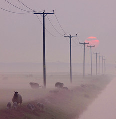 Sheep In The Misty Sunrise (Julian Barker) Tags: mist water sunrise canon eos julian stream sheep cut norfolk wires poles barker telegraph horsey broads