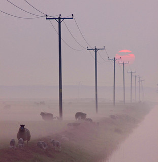 Sheep In The Misty Sunrise
